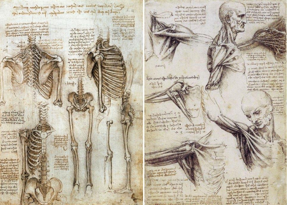 レオナルド・ダ・ビンチ解剖図