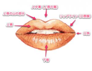 唇 の各、名称