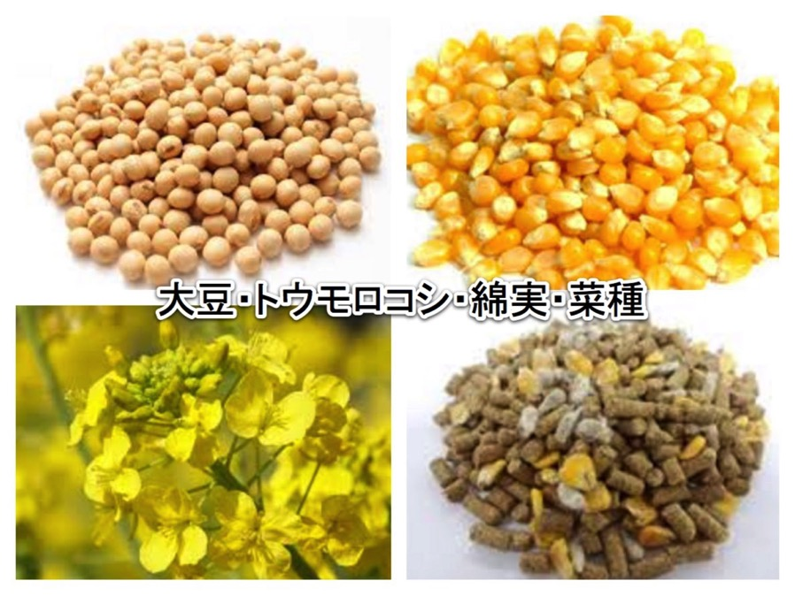 大豆 トウモロコシ 綿実 菜種